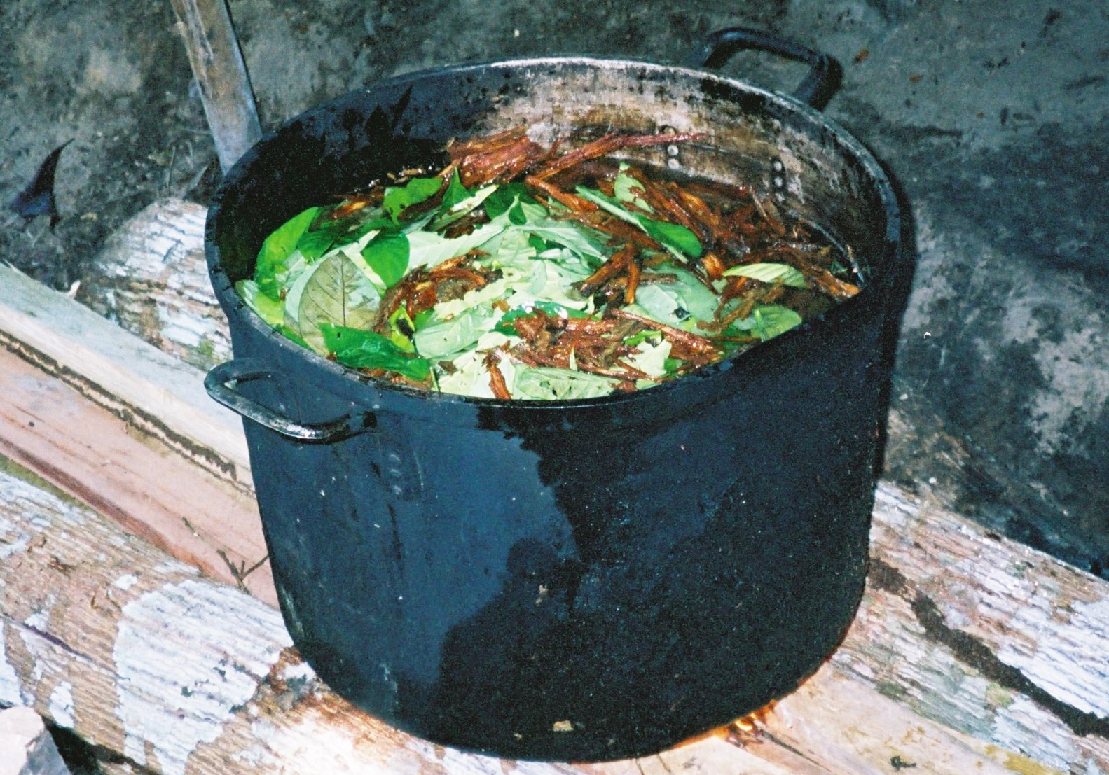taboojive.com_wp-content_uploads_2014_01_ayahuasca-brewing.jpg